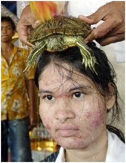 medicinal benefits of terrapins